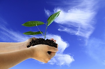 seed of success growth image